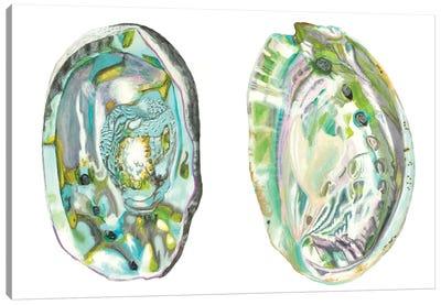 Abalone Shells II Canvas Art Print