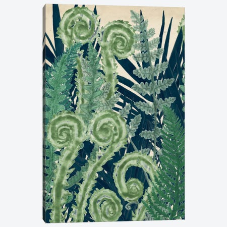 Fiddlehead Waltz I Canvas Print #NMC30} by Naomi McCavitt Art Print