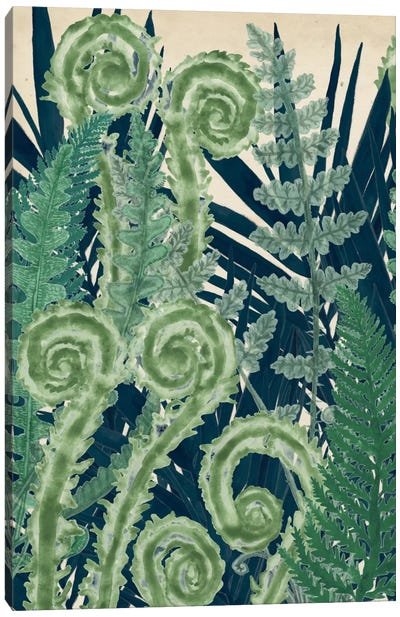 Fiddlehead Waltz I Canvas Art Print