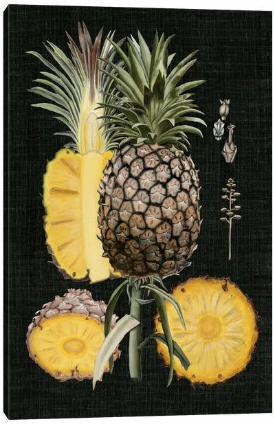 Graphic Pineapple Botanical Study II Canvas Print #NMC33