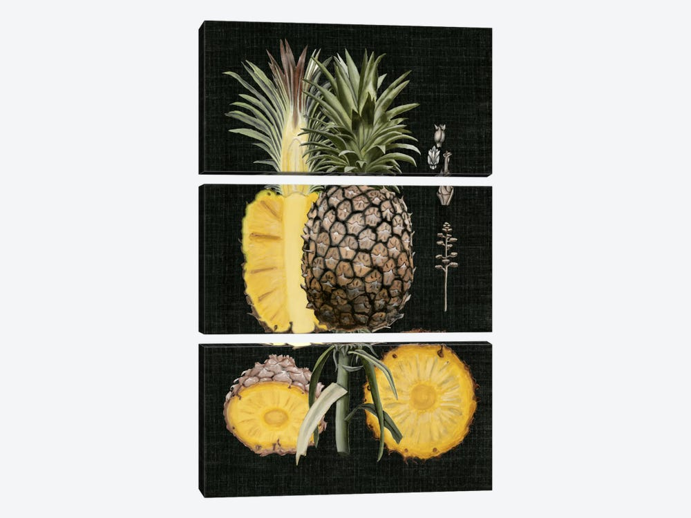 Graphic Pineapple Botanical Study II by Naomi McCavitt 3-piece Canvas Wall Art