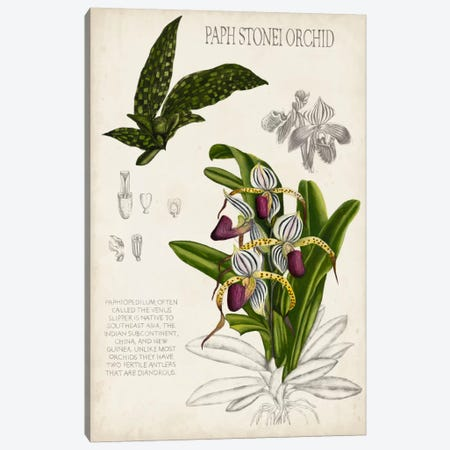 Orchid Field Notes I Canvas Print #NMC43} by Naomi McCavitt Canvas Wall Art