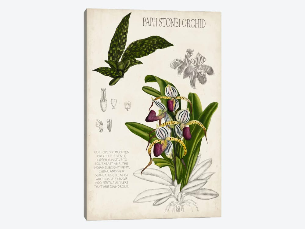 Orchid Field Notes I by Naomi McCavitt 1-piece Art Print