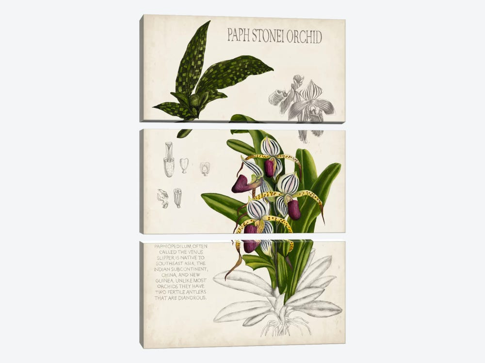 Orchid Field Notes I by Naomi McCavitt 3-piece Canvas Print