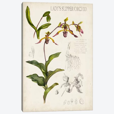 Orchid Field Notes III Canvas Print #NMC45} by Naomi McCavitt Canvas Art Print