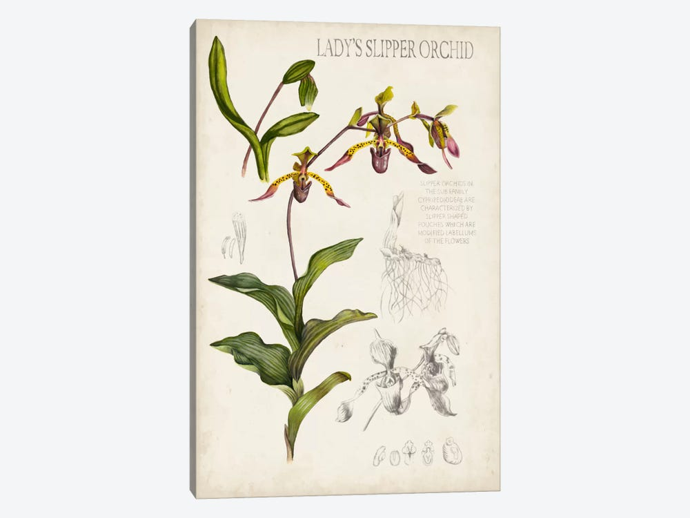 Orchid Field Notes III by Naomi McCavitt 1-piece Art Print