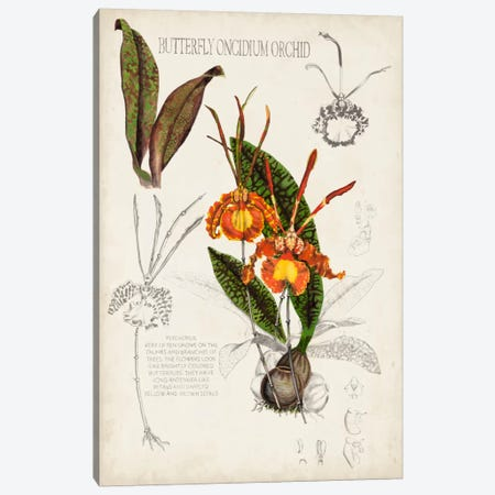Orchid Field Notes IV Canvas Print #NMC46} by Naomi McCavitt Canvas Print