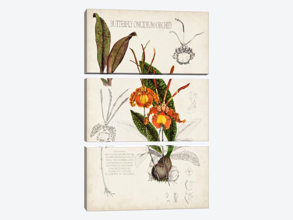 Orchid Field Notes IV by Naomi McCavitt 3-piece Canvas Wall Art