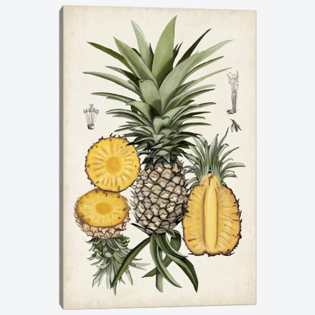Pineapple Botanical Study I Canvas Print #NMC47} by Naomi McCavitt Canvas Print