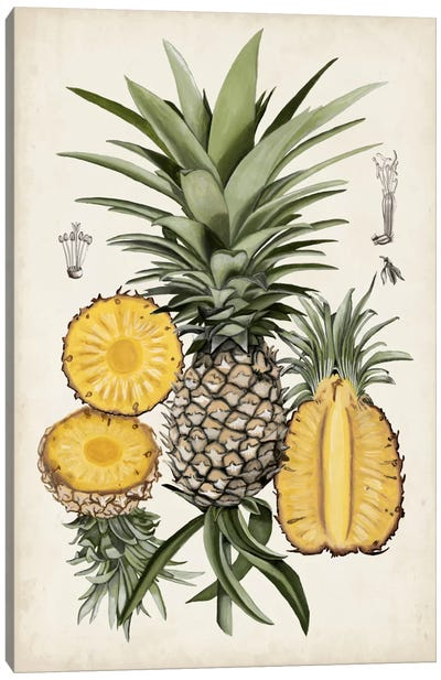 Pineapple Botanical Study I Canvas Art Print