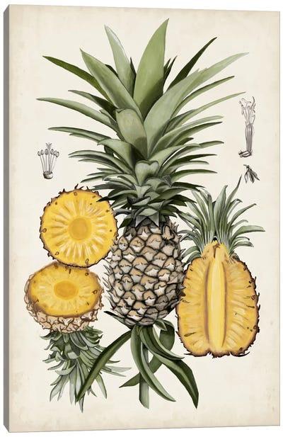 Pineapple Botanical Study I Canvas Print #NMC47