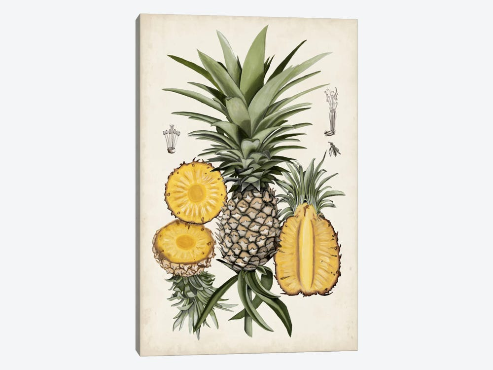 Pineapple Botanical Study I by Naomi McCavitt 1-piece Canvas Art Print