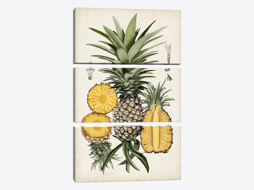 Pineapple Botanical Study I by Naomi McCavitt 3-piece Canvas Print