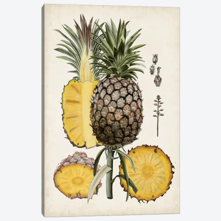 Pineapple Botanical Study II Canvas Print #NMC48} by Naomi McCavitt Canvas Wall Art