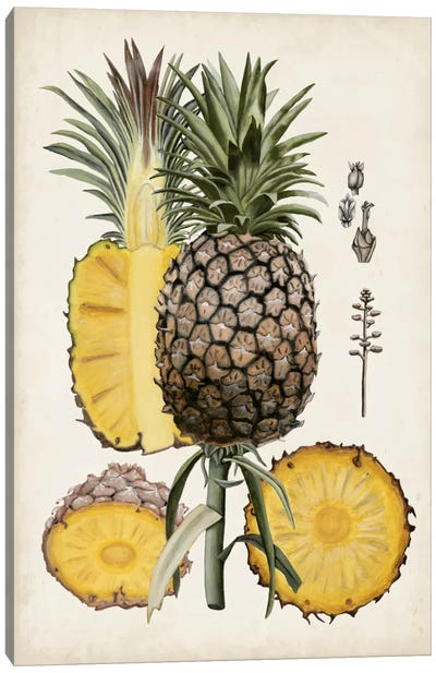 Pineapple Botanical Study II Canvas Print #NMC48