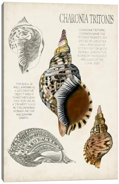 Seashell Field Notes I Canvas Art Print