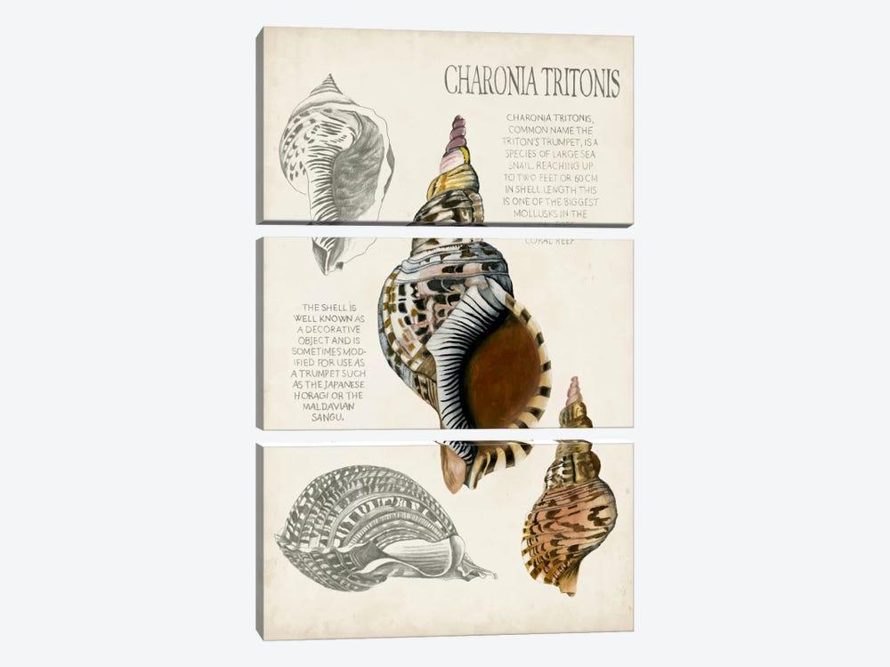 Seashell Field Notes I by Naomi McCavitt 3-piece Canvas Print