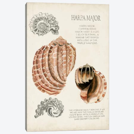 Seashell Field Notes II Canvas Print #NMC53} by Naomi McCavitt Canvas Print