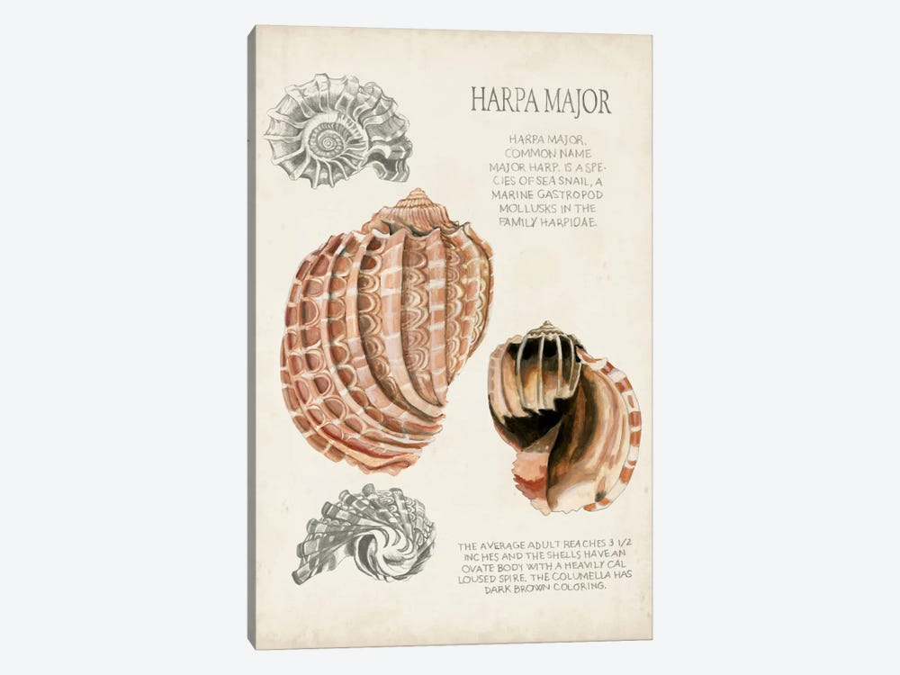 Seashell Field Notes II 1-piece Canvas Art