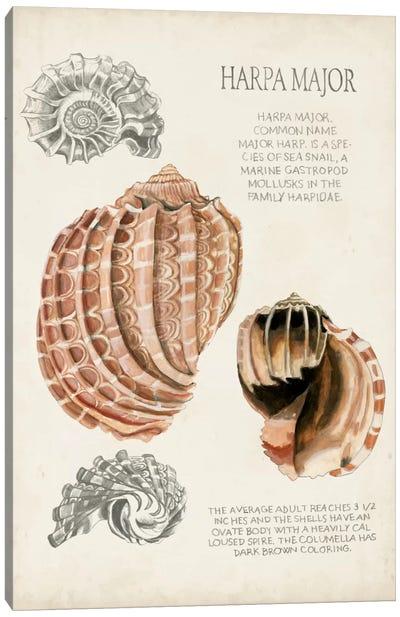 Seashell Field Notes II Canvas Art Print
