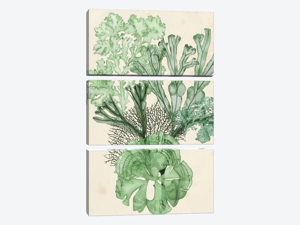 Seaweed Composition I by Naomi McCavitt 3-piece Art Print