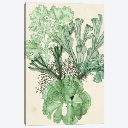Seaweed Composition I Canvas Print #NMC54} by Naomi McCavitt Canvas Artwork