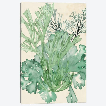 Seaweed Composition II Canvas Print #NMC55} by Naomi McCavitt Canvas Wall Art