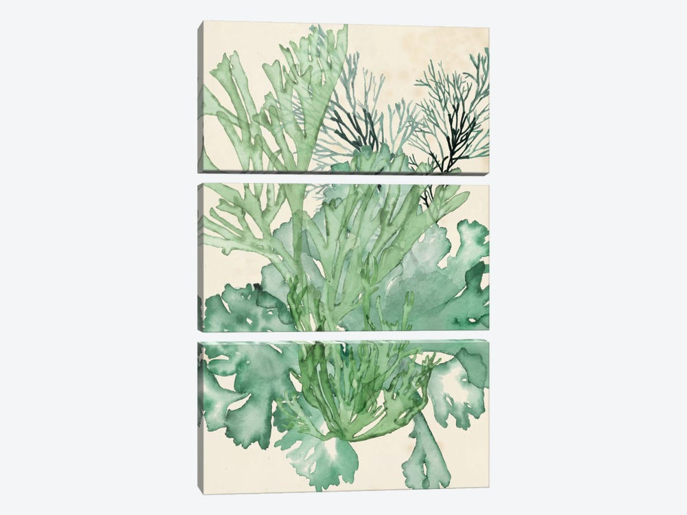 Seaweed Composition II by Naomi McCavitt 3-piece Canvas Art