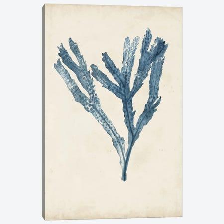 Seaweed Specimens I Canvas Print #NMC56} by Naomi McCavitt Canvas Artwork