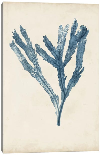 Seaweed Specimens I Canvas Art Print