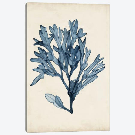 Seaweed Specimens II Canvas Print #NMC57} by Naomi McCavitt Canvas Wall Art