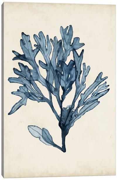 Seaweed Specimens II Canvas Art Print