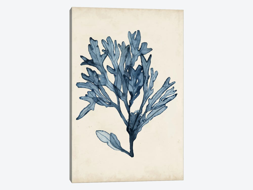 Seaweed Specimens II 1-piece Canvas Wall Art