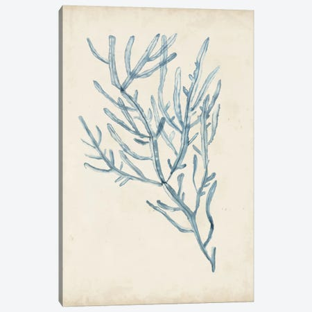 Seaweed Specimens III Canvas Print #NMC58} by Naomi McCavitt Art Print