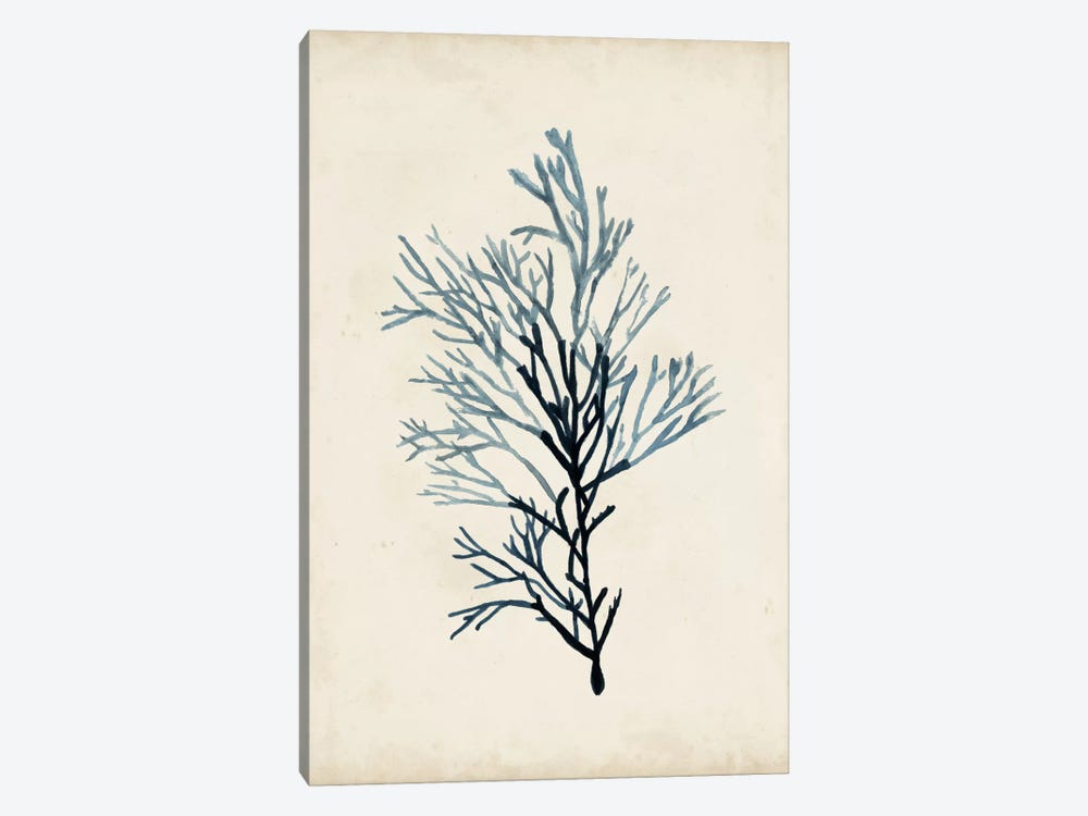 Seaweed Specimens IV 1-piece Canvas Wall Art