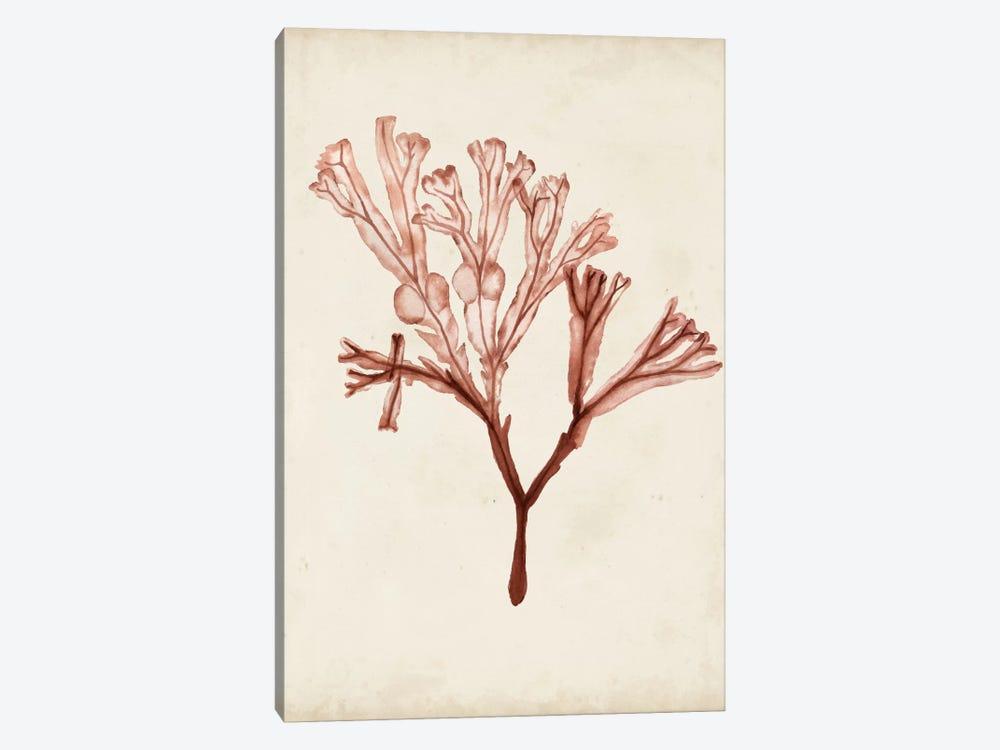 Seaweed Specimens V by Naomi McCavitt 1-piece Canvas Art