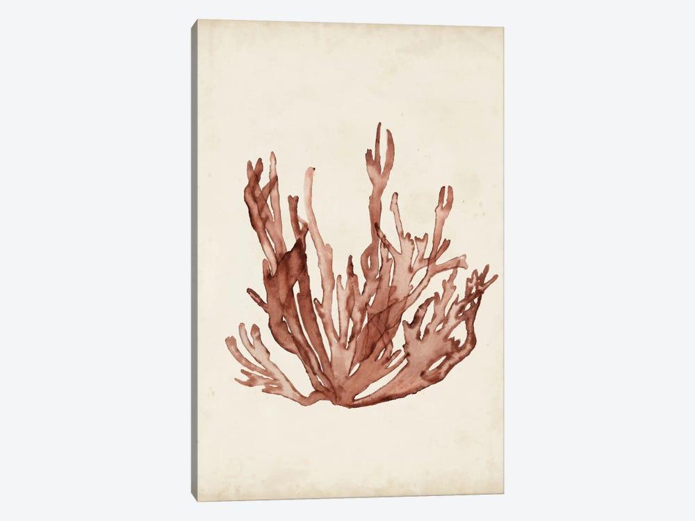 Seaweed Specimens VII by Naomi McCavitt 1-piece Canvas Artwork