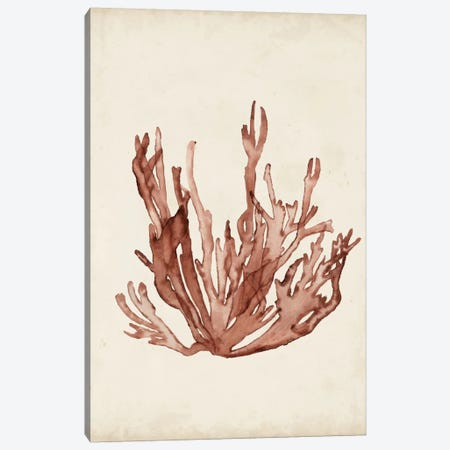 Seaweed Specimens VII Canvas Print #NMC62} by Naomi McCavitt Canvas Art