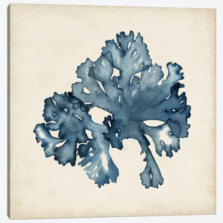 Seaweed Specimens IX Canvas Print #NMC64} by Naomi McCavitt Canvas Print