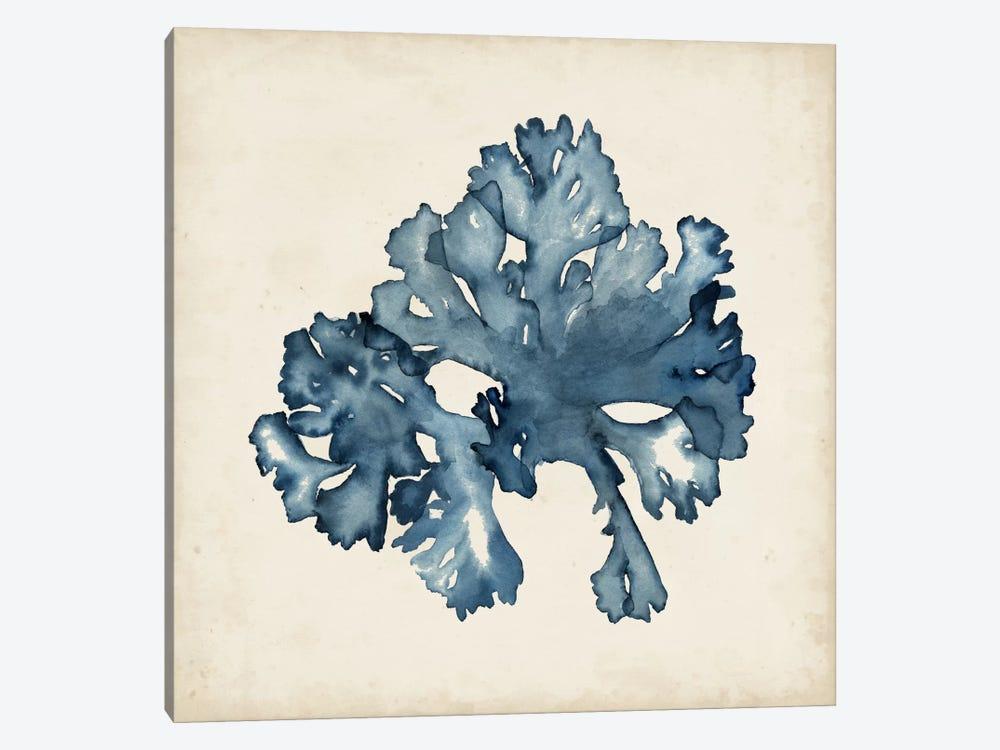Seaweed Specimens IX by Naomi McCavitt 1-piece Canvas Artwork
