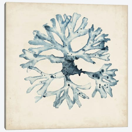Seaweed Specimens X Canvas Print #NMC65} by Naomi McCavitt Canvas Print