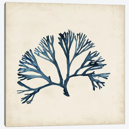 Seaweed Specimens XI Canvas Print #NMC66} by Naomi McCavitt Art Print