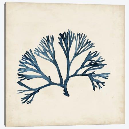 Seaweed Specimens XI Canvas Print #NMC66} by Naomi McCavitt Art Print
