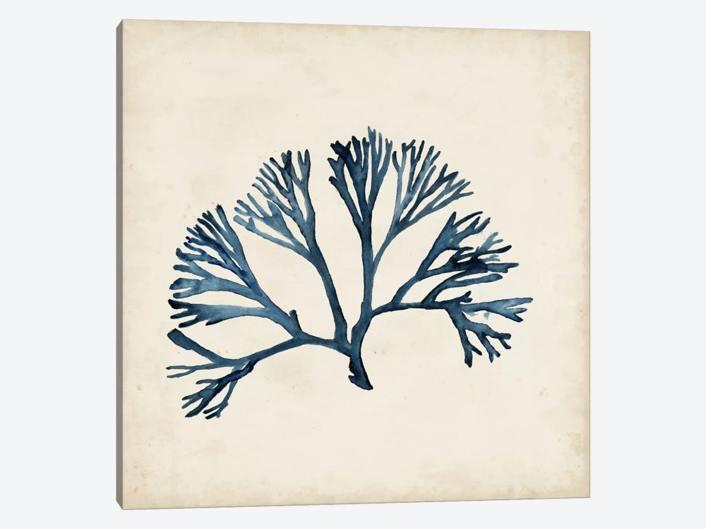 Seaweed Specimens XI by Naomi McCavitt 1-piece Canvas Wall Art