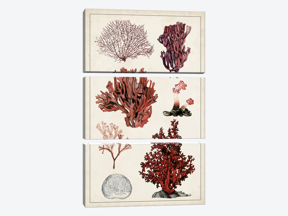 Antique Coral Study II 3-piece Art Print