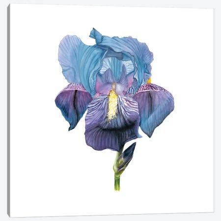 Brighton Blooms IV Canvas Print #NMC89} by Naomi McCavitt Canvas Wall Art