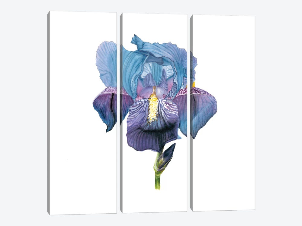 Brighton Blooms IV 3-piece Art Print