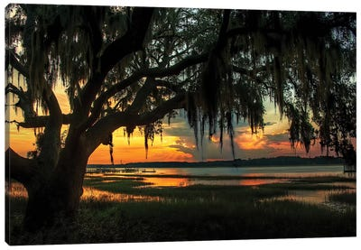 Savannah Evening Canvas Art Print
