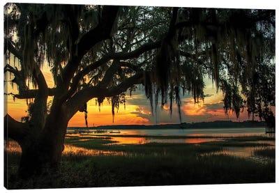 Savannah Evening Canvas Art Print