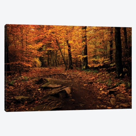 Autumn Path Canvas Print #NMI1} by Natalie Mikaels Canvas Artwork